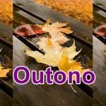 Outono : A estação começa hoje!