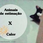 Animais de estimação X Calor