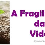 Vida e sua fragilidade esquecida