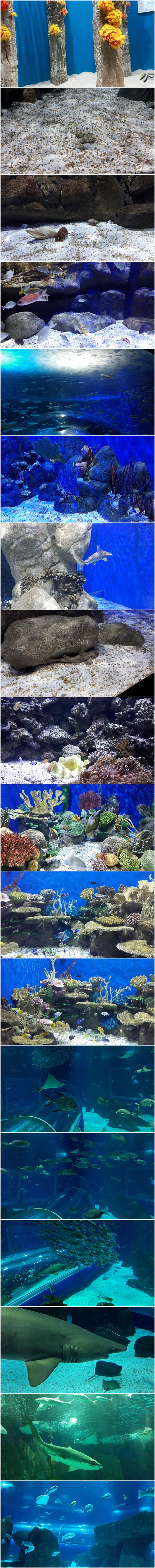 AquaRio peixes